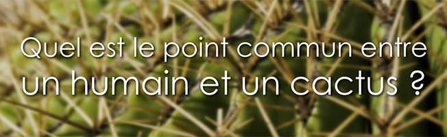 Lâcher prise ne signifie pas capituler - Quel est le point commun entre un être humain et un cactus ?